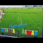 Wisata Sawah Desa Pematang Johar Tumbuhkan Perekonomian